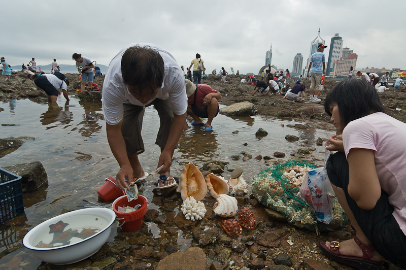 People collecting shells and sea life in  Qingdao, 2005