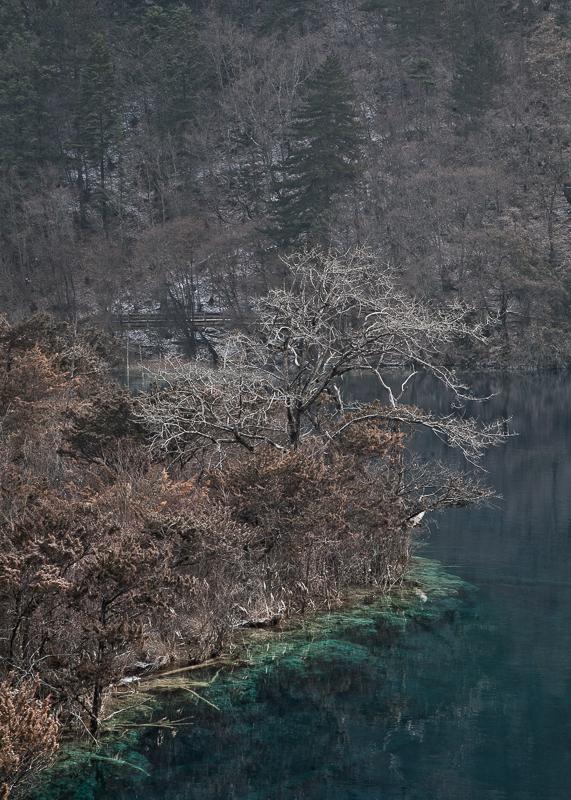 Frozen trees, Jiuzhaigou
