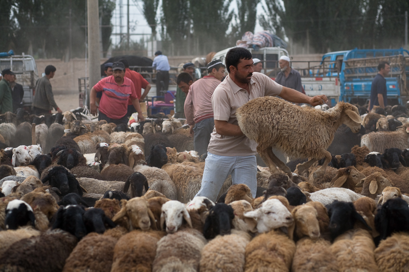 Farmer handles sheep at the livestock market, Kashgar, 2008