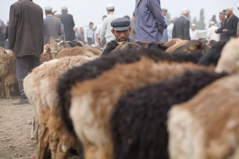 Farmer watches his sheep at the livestock market Kashgar, 2008